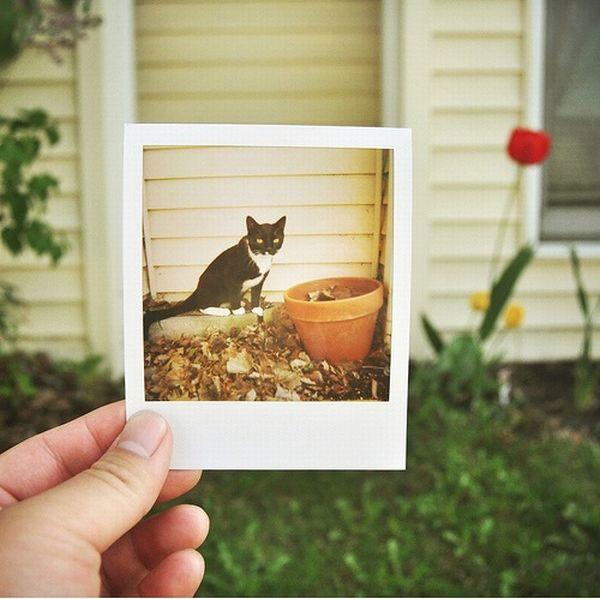 Play with Polaroids