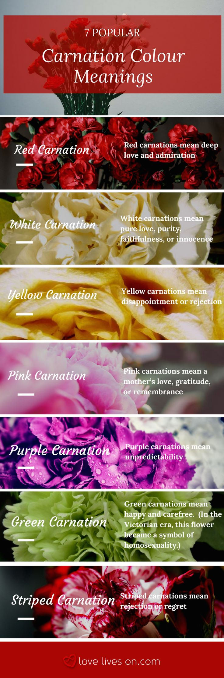 Learn 7 popular carnation flower meanings to help you bring meaning to your funeral arrangement.