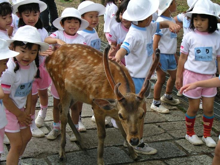 d4572e53b172e8f438d9c0fd2301088d  japanese school a deer - Japanese Kindergarten Uniform