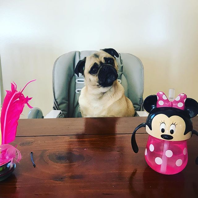Mommy My Puggy Stole My Highchair X Black Pug Puppies Kid
