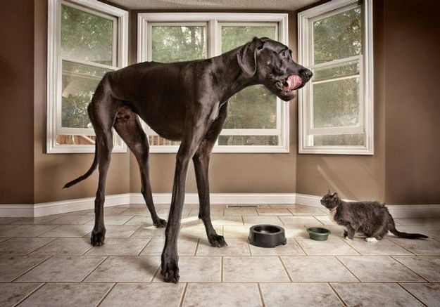 This Is The World's Tallest Dog, his name is Zeus