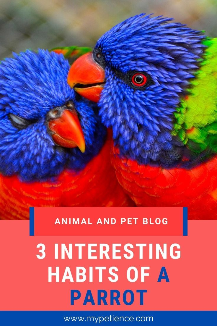 Where Do Parrots Live The Habits Of Parrots In 2020 With
