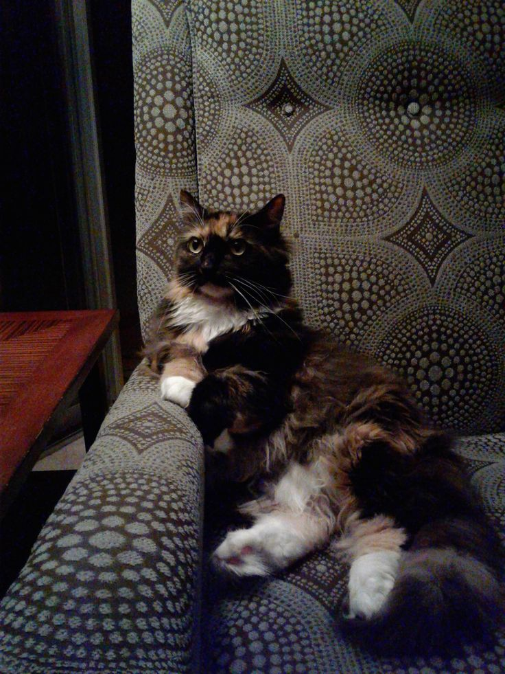 Reddit meet Nori the prettiest cat I've ever owned. She loves lounging in her armchair.