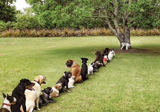 Purina Adv . Purina, azienda produttrice di cibo per animali domestici, ha realizzato una simpatica campagna Adv per la giornata Bark in the Park. Via indragraphicsolutions.blogspot.it