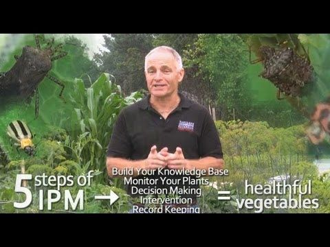 Integrated Pest Management (IPM) Basics