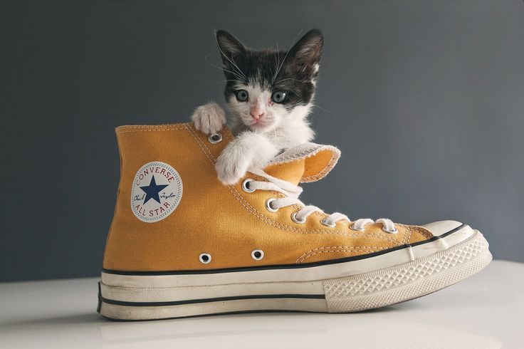 Converse kitten by Miguel Romero on 500px