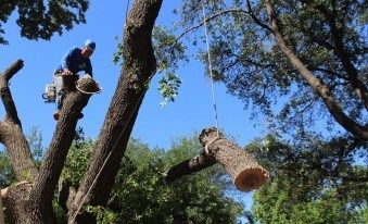 Tree Service #tree #service, #dallas, #tree #removal, #tree #trimming, #arborist, #tree #service #dallas, #texas, #tx, #tree #pruning, #stump #grinding, #stump #removal, #tree #service, #tree, #sales, #tree #cabling, #planting, #richardson, #plano, #garland, #service, #texas, #tx http://fiji.nef2.com/tree-service-tree-service-dallas-tree-removal-tree-trimming-arborist-tree-service-dallas-texas-tx-tree-pruning-stump-grinding-stump-removal-tree-service-tree-sales/  # Tree Service | Dallas Tree…