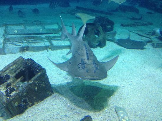 Camden Aquarium, Camden NJ