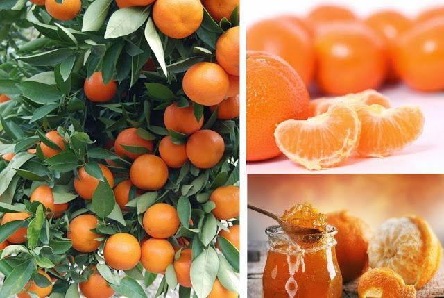 Beneficios de la Mandarina para la salud - Vida Lúcida