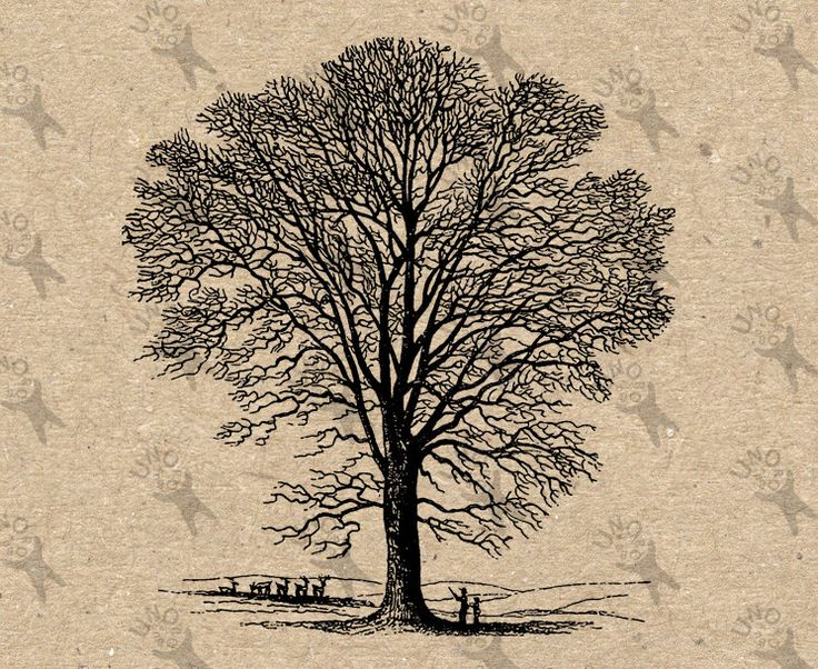 Vintage Image Bare Tree without leaves Instant Download Digital printable clipart graphic Transfer On Paper Burlap Pillows Totes Towels HQ by UnoPrint on Etsy #hq #png #bw #Ephemera #diy #old #book #illustration #gravure #inspiration #retro #antique #vintage #300dpi #craft #draw #drawing  #black #white #printable #crafts #transfer #decor #hand #digital #collage #scrapbooking #quality