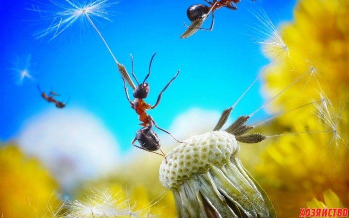 Гремучая смесь против муравьев