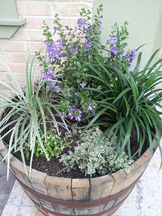 Whiskey Barrel Planter - love the colors