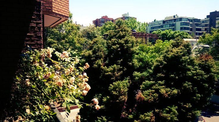 Vista terraza departamento 2 dormitorios 2 baños en calle Las Violetas, Providencia. www.meinhaus.cl
