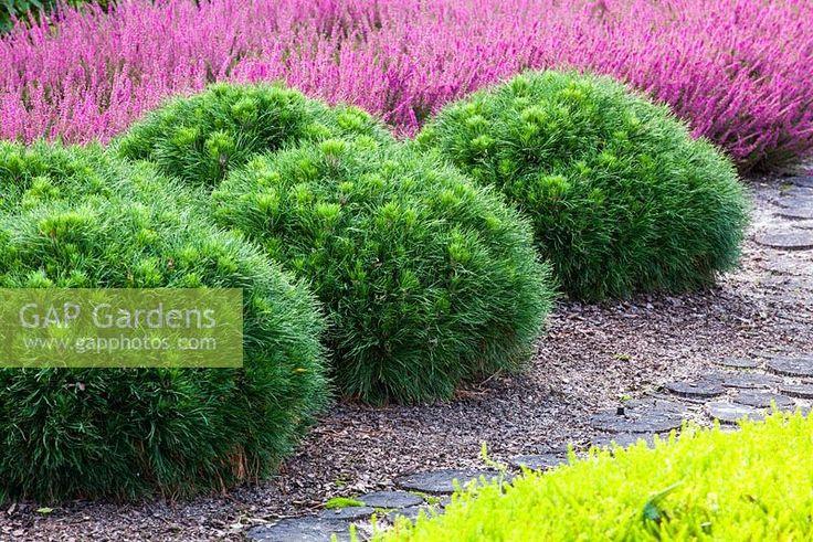 Les 75 meilleures images propos de jardin arbustes for Arbustes de jardin