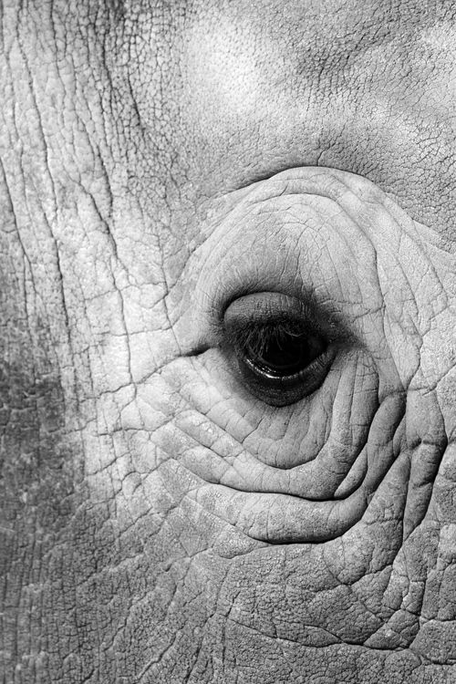 "●""Elephant Eye - Kruger National Park"" by Benjamin Nocke"