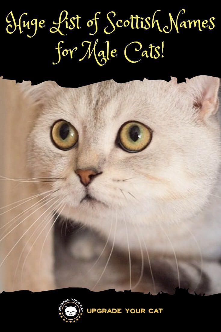 Huge List Of Scottish Cat Names For Male Cats Mit Bildern