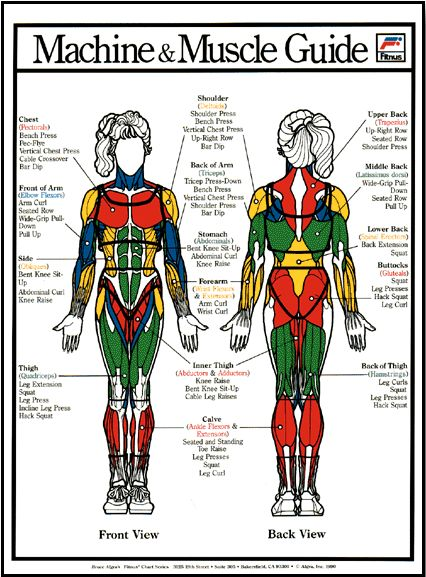 another chart of muscle groups, it is important to know