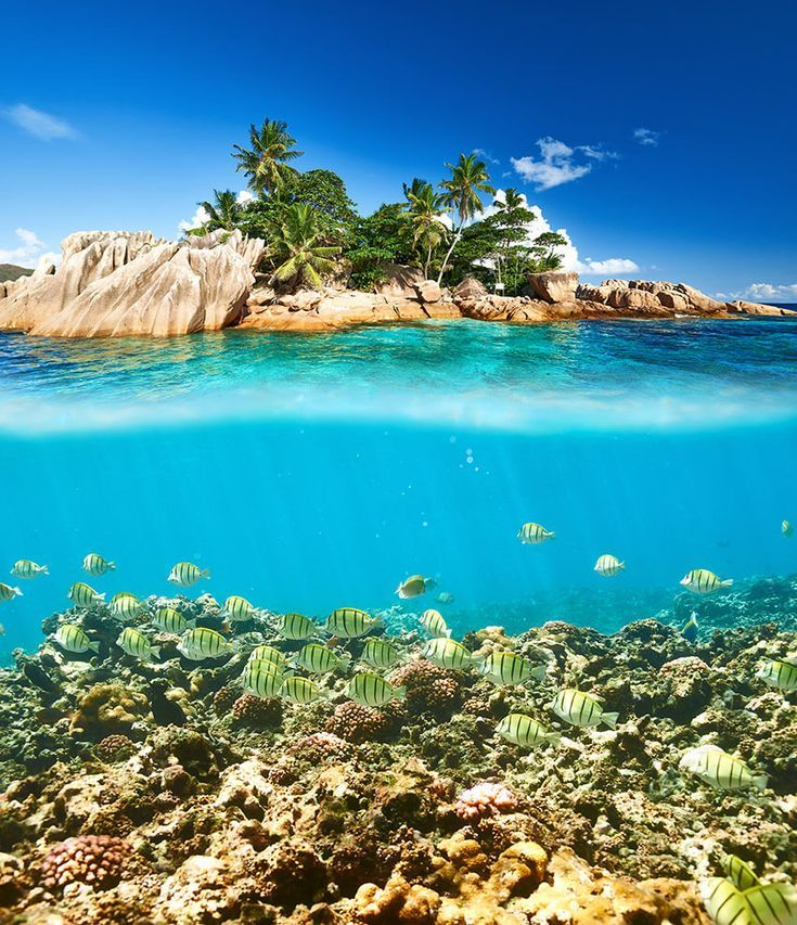Seychelles Beach: Seychelles Travel Guide: The Best Beach Destination You