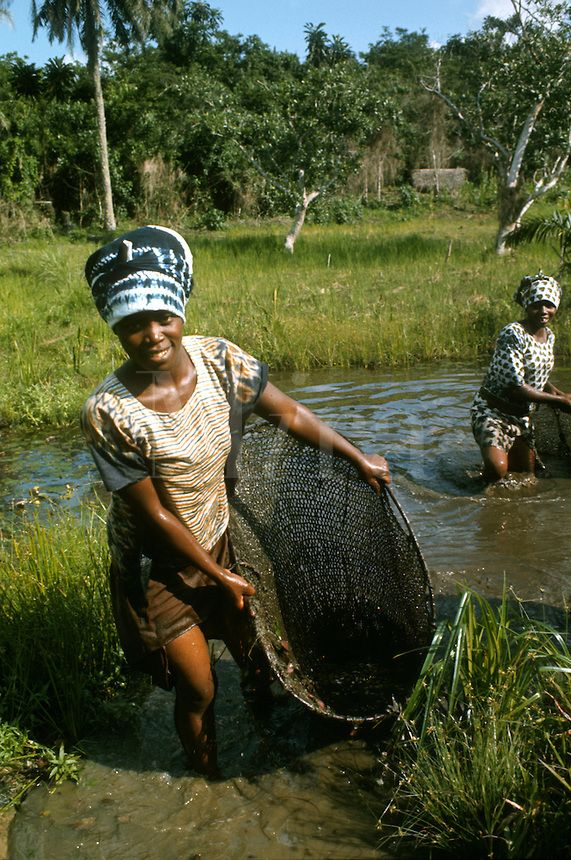 """Kpelle women fishing with hand nets, Liberia. Kpelle is one of the largest indigenous group in Liberia, and mostly located in central and western Liberia. Rice is the main staple food. Contrary to popular belief, descendants of African Americans are only 2.5 % of the population. Kpelle speak the Kpelle language."""