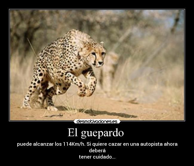 71 Best Images About Guepardos On Pinterest Animales