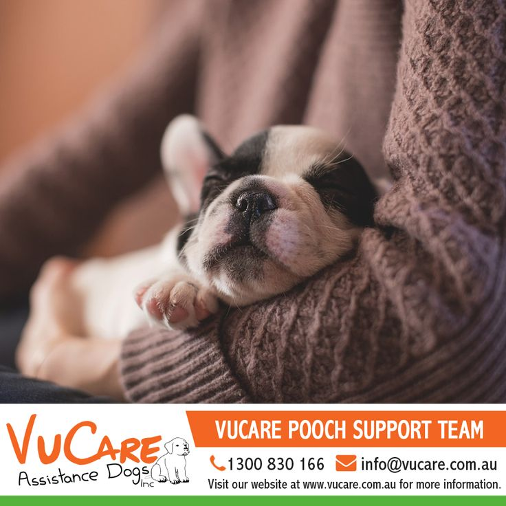 If you have, or know of, a puppy/young dog, which you think might be suitable for training, please contact our pooch support team by calling our Head Office on 1300 363 700 or by email at poochteam@vucare.com.au.   #Dogs #Pets #VuCare #DogsAssistance #Dog #DogOnDuty #DogCare #ServiceDogs #DogsForDisabilities #AssistanceDogs #DogTraining #AssistanceDogProgram #trainer #dogtrainer