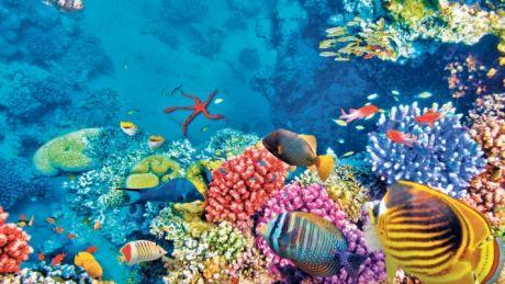 Marea Barieră de Corali, în mare PERICOL! Explicaţia specialiştilor