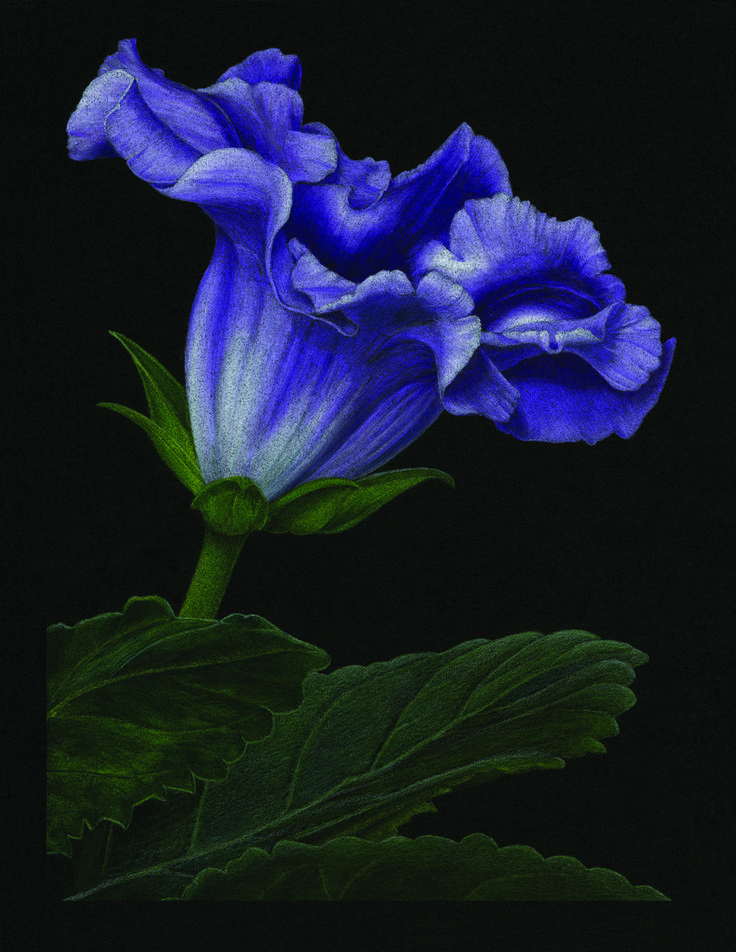 Burnishing on Black: Free Colored Pencil Demo with Gary Greene on http://www.artistsnetwork.com