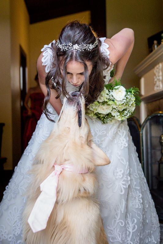 A noiva e seu golden retriever