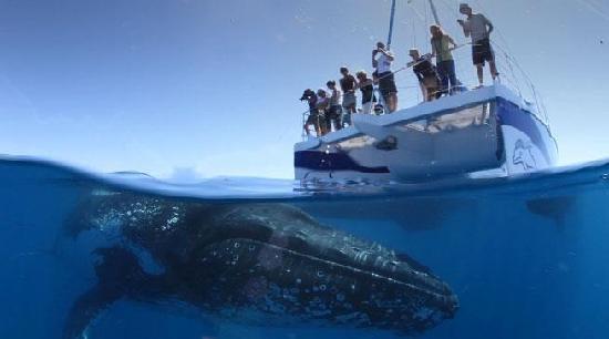 Hervey Bay whale watching #Queensland #Australia  http://www.tripadvisor.com.au/ShowForum-g255067-i460-Queensland.html