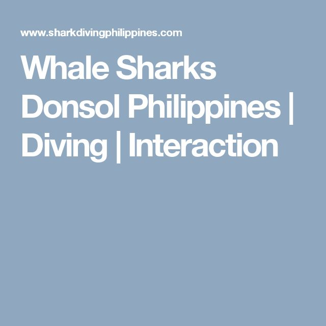 Whale Sharks Donsol Philippines | Diving | Interaction