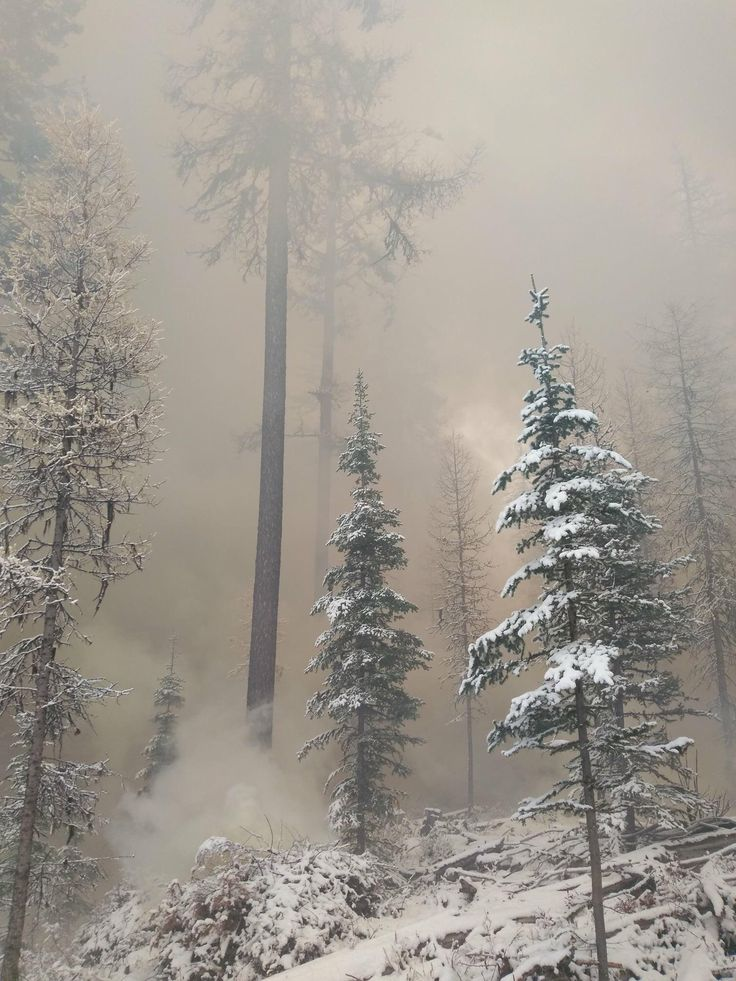 Snowy forest on fire. Beauty in the midst of destruction. Northern Washington [3264x2448]