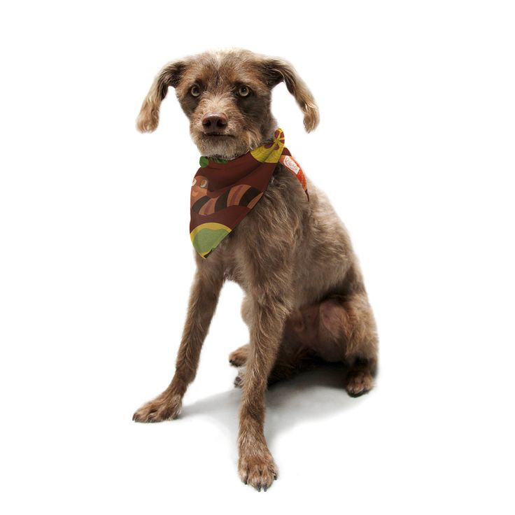 "Jane Smith ""Autumn Repeat"" Brown Bugs Pet Bandana"