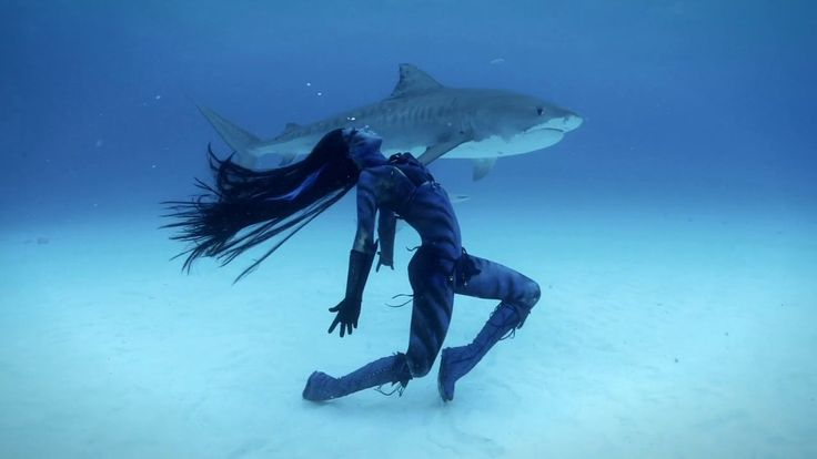 Tiger Sharks http://www.bluespheremedia.com/2014/06/tigress-shark-world-first-woman-dances-with-tiger-sharks/