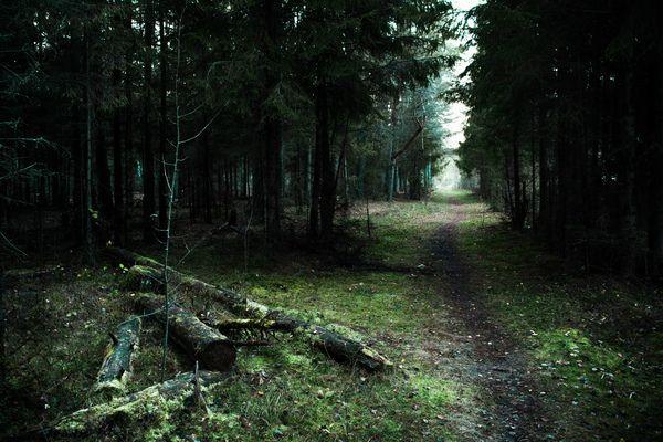 Фотографии русского леса фотография, лес
