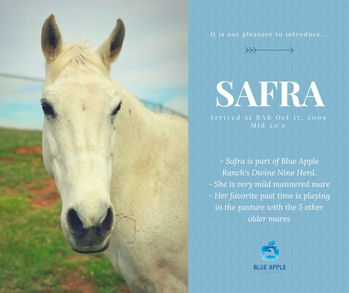 We are pleased to introduce - SAFRA! This beautiful mare is in her mid 20's and loves life with her friends in the Devine Nine Herd here at Blue Apple Ranch!