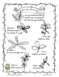 137 best Herbal Identification images on Pinterest