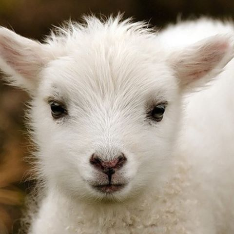 Ambiente: I just #wanna brush him ... (adorable_animals) (link: http://ift.tt/2fMlEXy )