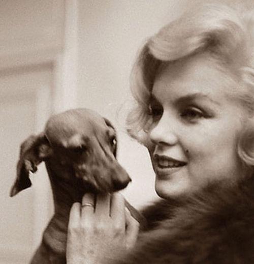 Marilyn Monroe with a dachshund.
