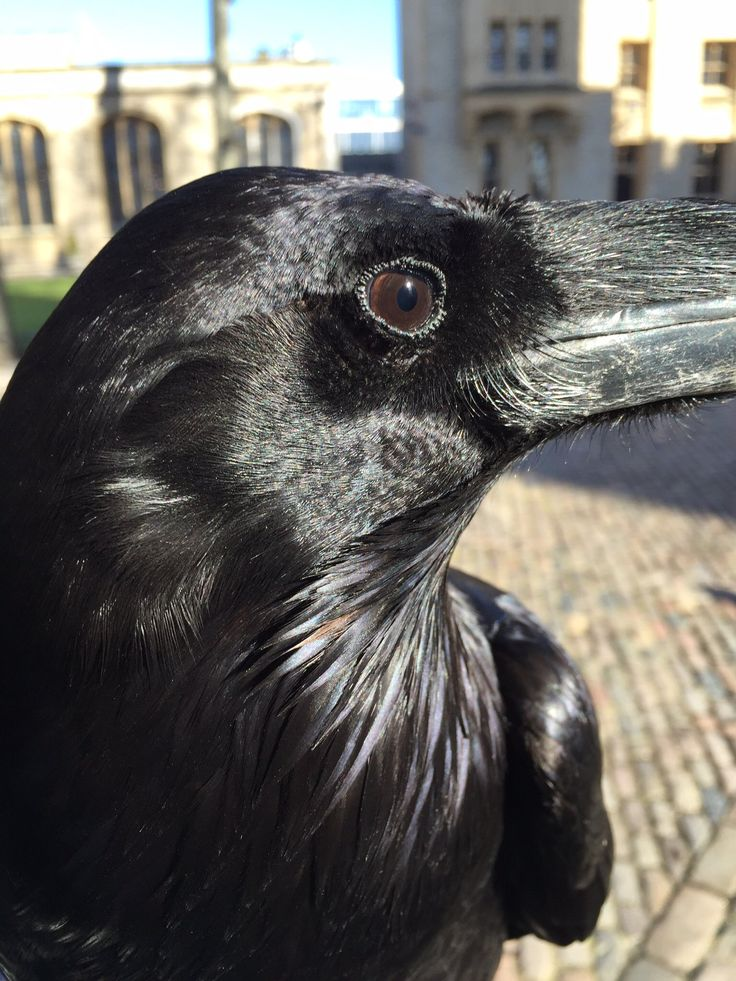 "Ravenmaster on Twitter: ""https://t.co/ieDqdYeTzQ"""