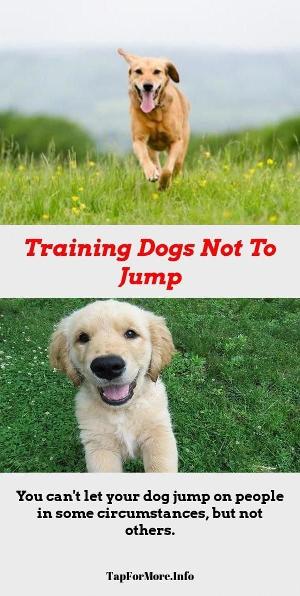 Stop Dog Jumping And Dog Training Tips New Puppy Check Pin For