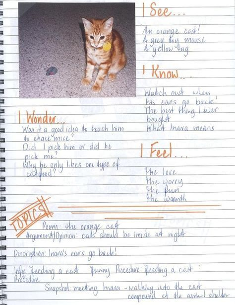 Writers' Notebooks - I love great ideas to use with writer's notebook...this blog post is FULL of great pages and ideas!