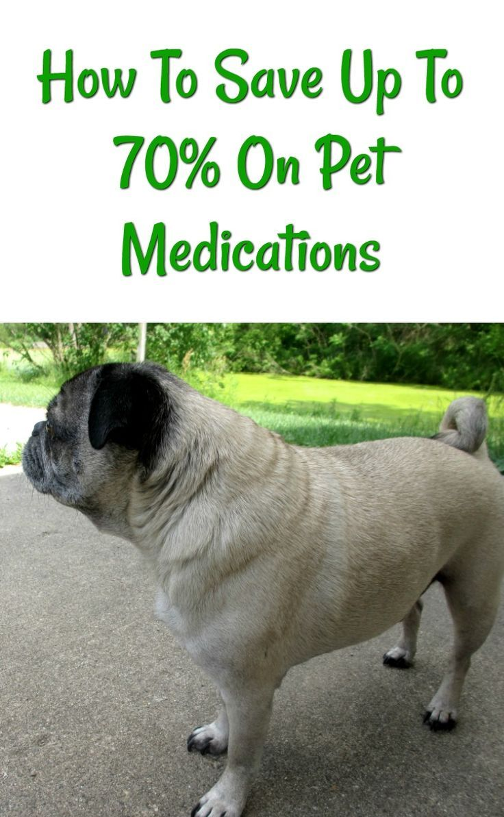 How to save money on pet prescriptions and medications. No pet health insurance or monthly payments involved!