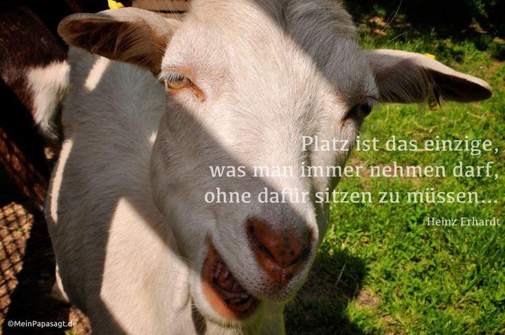 Platz ist das einzige, was man immer nehmen darf, ohne dafür sitzen zu müssen… Heinz Erhardt #zitate #humor #deutsch      Weisheiten & Zitate TÄGLICH NEU auf www.MeinPapasagt.de