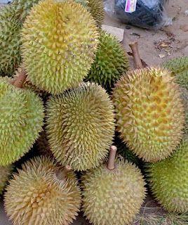 Durian (Durio Zibethinus) Alternative medicine tre...