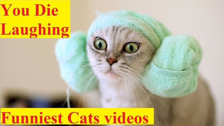 Try Not to Laugh Watching world's Top Funniest Cat Videos 2017  EXTREMEL...