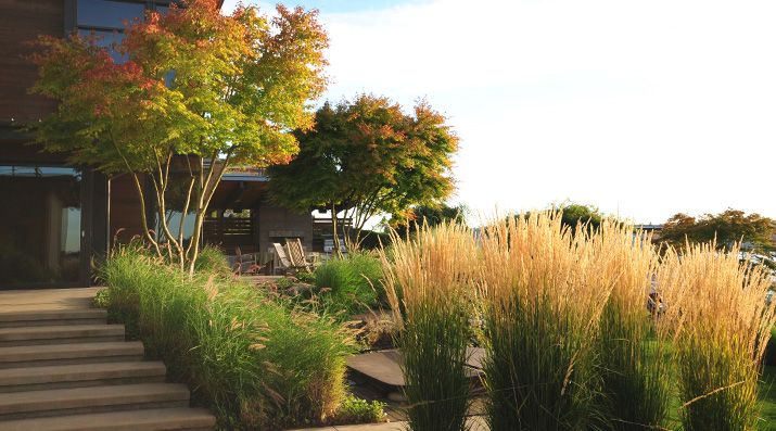 allworth: Lake Houses, Contemporary Landscapes, Landscape Design, Allworth Design, Garden, Garden Spaces