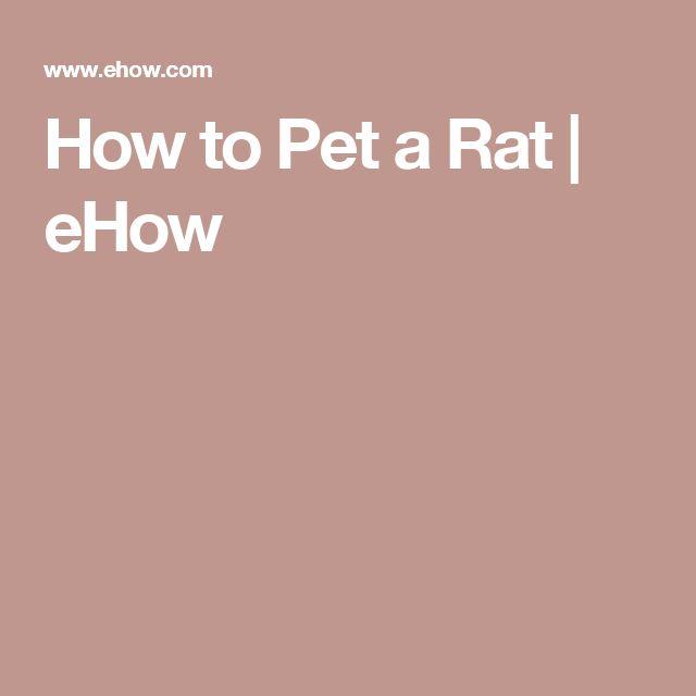 How to Pet a Rat | eHow