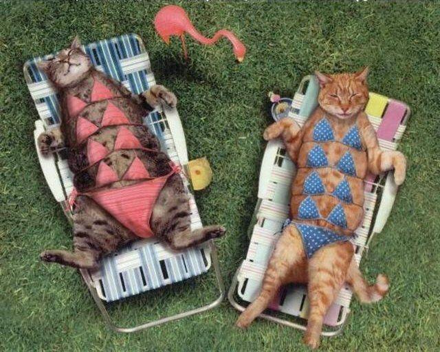 Cats in bikinis.