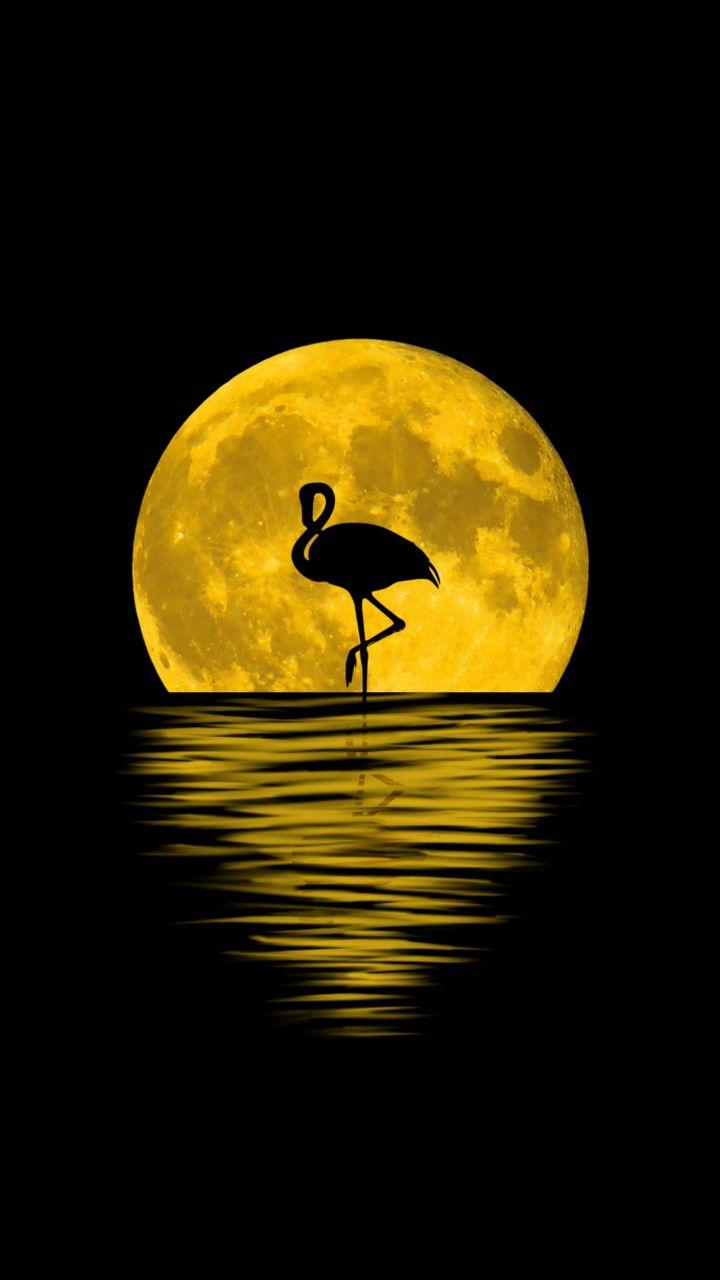 Flamingo, moon, silhouette, reflections, digital art, 720x1280 wallpaper
