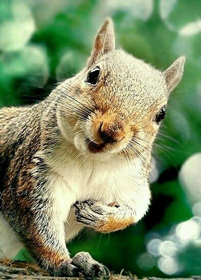 Squirrel kiss meme - photo#32